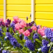 Keukenhof Gardens — Stock Photo #3942241