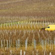 Vineyards of Pouilly-Fuisse - Stock Photo