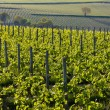 Vineyard, France — Stock Photo