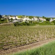 Stock Photo: Vineyard, Loire Valley, France