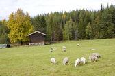 Landscape near Nesbyen, Norway — Stock Photo