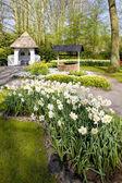 Keukenhof gardens — Foto Stock