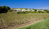 Vineyard, Loire Valley, France — Stock Photo