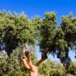 Cork oak - Stock Photo