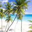 Barbados, Caribbean — Stock Photo #3950223