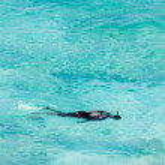 Snorkeling — Stock Photo #3950225