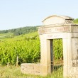 Vineyards, Burgundy, France - Stock Photo