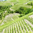 Grand cru vineyards, France - 
