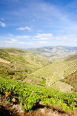Douro Valley — Stock Photo