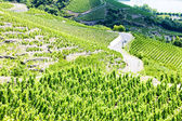 Cote Rotie, Rhone-Alpes, France — Stock Photo