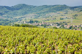 Vineyars near Julienas, France — Stock Photo