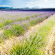 Lavender field, Provence, France — Foto Stock