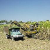 Sugar cane harvest, Sancti Sp — Stock Photo