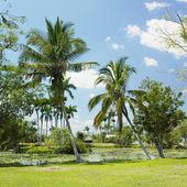 Boca de Guam — Stock Photo