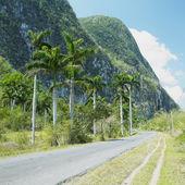 Wakacje na dolinie, pinar del r — Zdjęcie stockowe