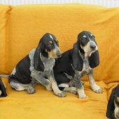 Puppies — Stock Photo