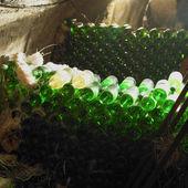 Wine cellar, Czech Repub — Stock Photo
