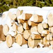 Logs — Stock Photo