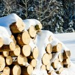 Logs — Stock Photo #4291805