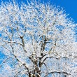 Winter tree — Stock Photo #4291820
