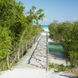 Path towards Larga beach, Cayo Coco, Cuba — Stock Photo