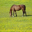 Horse on meadow — Stock Photo #4296676