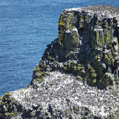 Isla de Rathlin — Foto de Stock
