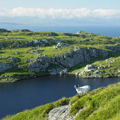 Sheep''s Head Peninsula, County Cork, Ireland — Stock Photo