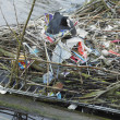 Nest with rubbish, Alkmaar, Netherlands - Stock Photo