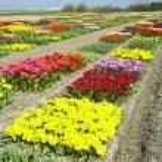 Garden, Netherlands — Stock Photo