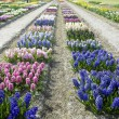 Stock Photo: Garden, Netherlands