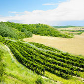 Vineyard, Eko Hnizdo, Czech Republic — Stockfoto