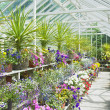 Greenhouse, Birr Castle Gardens, County Offaly, Ireland — Foto de Stock
