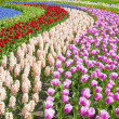 Keukenhof Gardens, Lisse, Netherlands — Stock Photo #4398489
