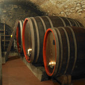 Wine cellar, Litomerice, Czech Republic — Stock Photo