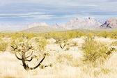 Landscape of Arizona, USA — Stock Photo