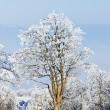 Orlicke Mountains in winter, Czech Republic — Stock Photo