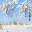 winter bomen — Stockfoto #4425795