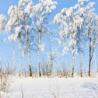 winter bomen — Stockfoto