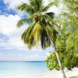 Stock Photo: Enterprise Beach, Barbados, Caribbean