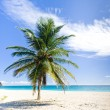 Foul Bay, Barbados, Caribbean — Stock Photo #4426808