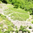 Stock Photo: Vineyards of Cote Rotie, Rhone-Alpes, France