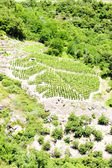 Vineyards of Cote Rotie, Rhone-Alpes, France — Stock Photo