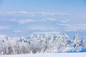 冬には、チェコ共和国で jeseniky 山 — ストック写真