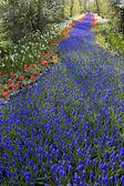 Keukenhof Gardens, Lisse, Netherlands — Stock Photo