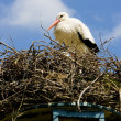 Stork, Netherlands — Stock Photo #4502523