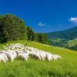 Stock Photo: Sheep herd, MalFatra, Slovakia