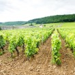 Vineyards near Gevrey-Chambertin, Cote de Nuits,Burgundy, France - Stock Photo