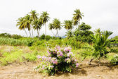 Nature of Grenada island — Stock Photo