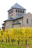 Wijngaarden in de buurt van johannisberg paleis, hessen, duitsland — Stockfoto